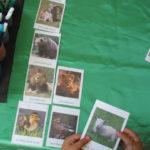 Actividades con animales y plantas, para descargar e imprimir