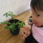 La Mimosa Sensitiva: Plantas que te enseñan que ellas están tan vivas como tú